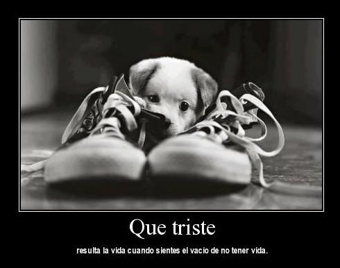 Cachorro entre zapatos